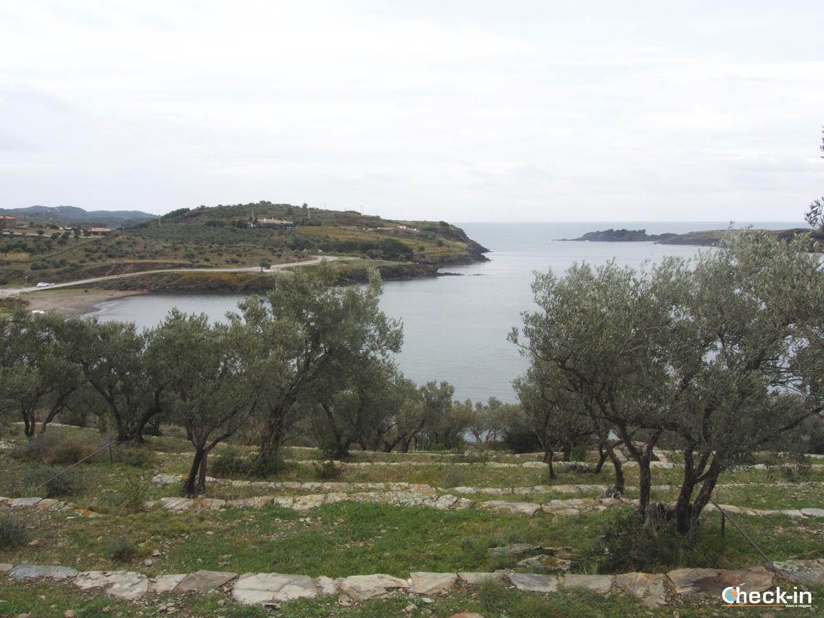 Gli oliveti e Port Lligat ammirati dalla collina vicina alla casa di Dalí