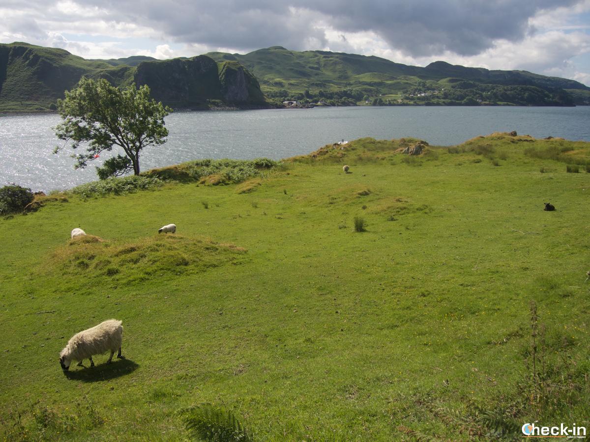 Primi passi sull'isola di Kerrera