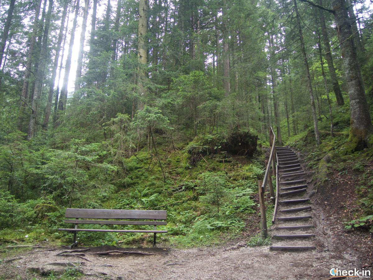 Il bosco che conduce alle porte di Ellmau