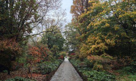 I parchi di Londra: Holland Park ed i suoi giardini