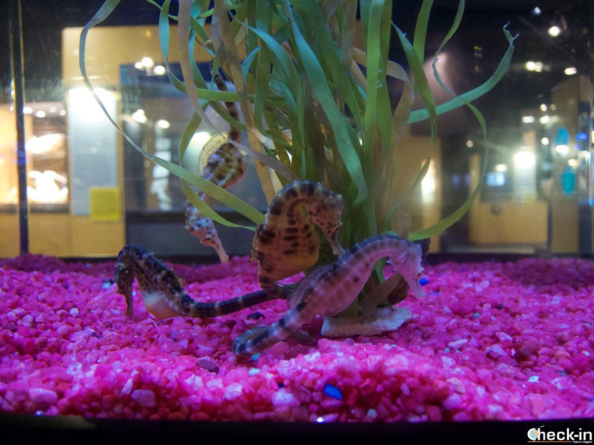 Visita dell'Aquarium Finisterrae di La Coruña