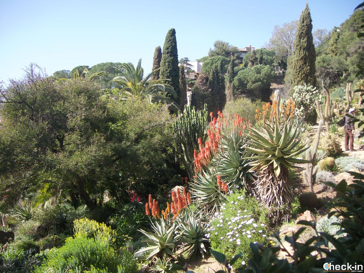 Visita del Jardín Botánico Marimurtra di Blanes, Costa Brava
