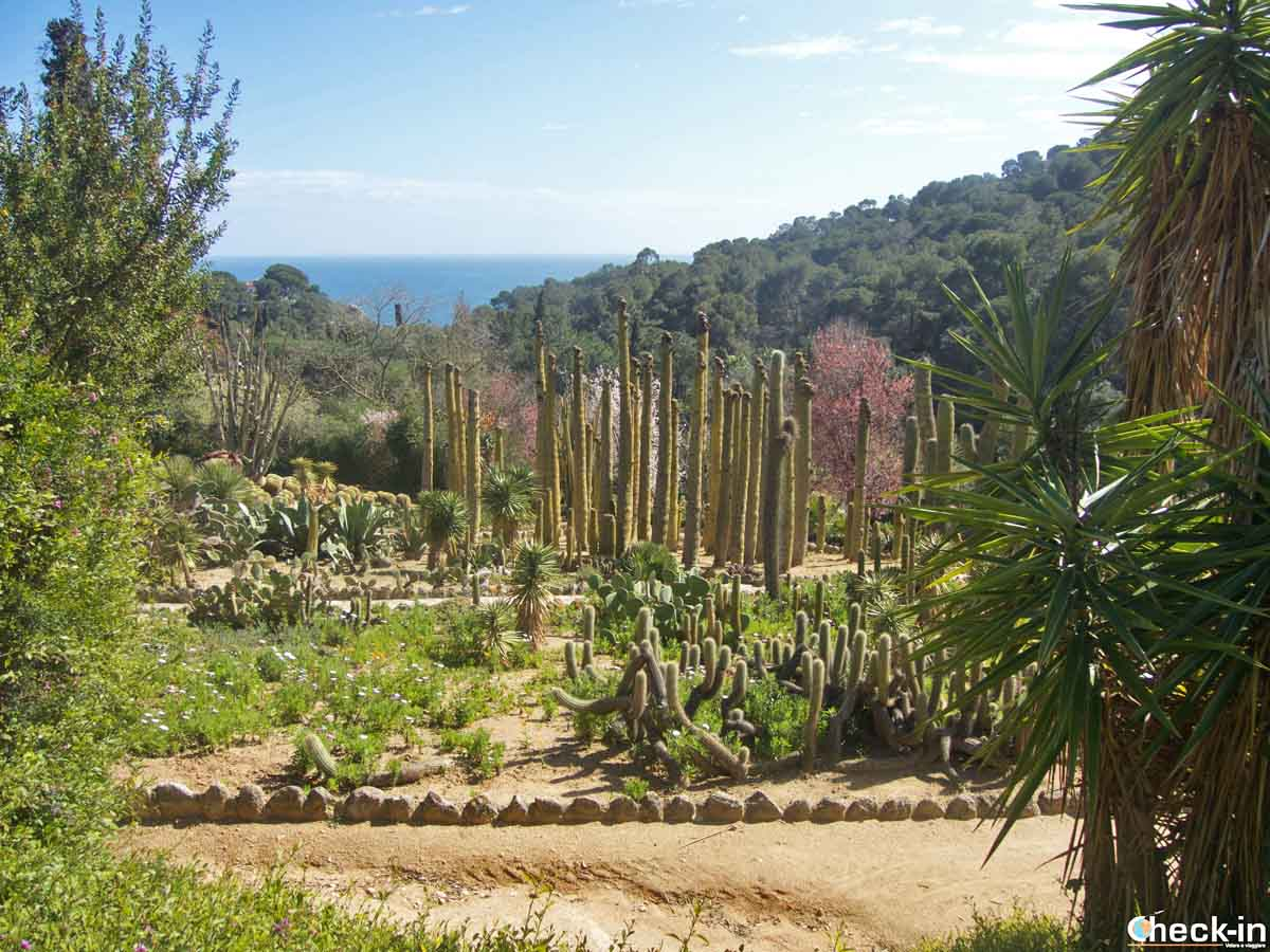 Visita del giardino Pinya de Rosa a Blanes, Costa Brava