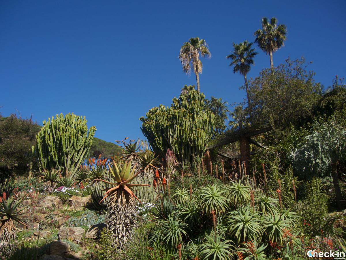 Visita del Jardín Botánico Marimurtra de Blanes, España