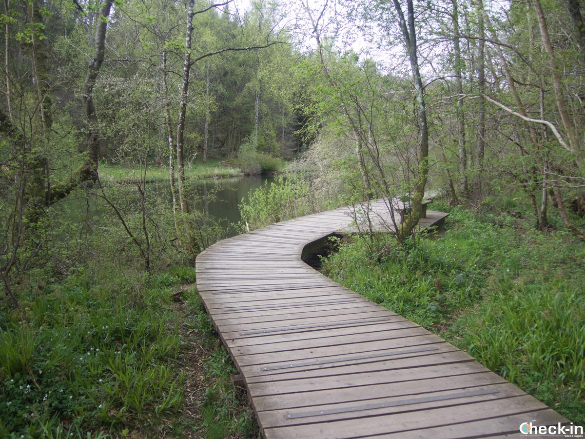 Il sentiero che costeggia le Falls of Clyde in Scozia