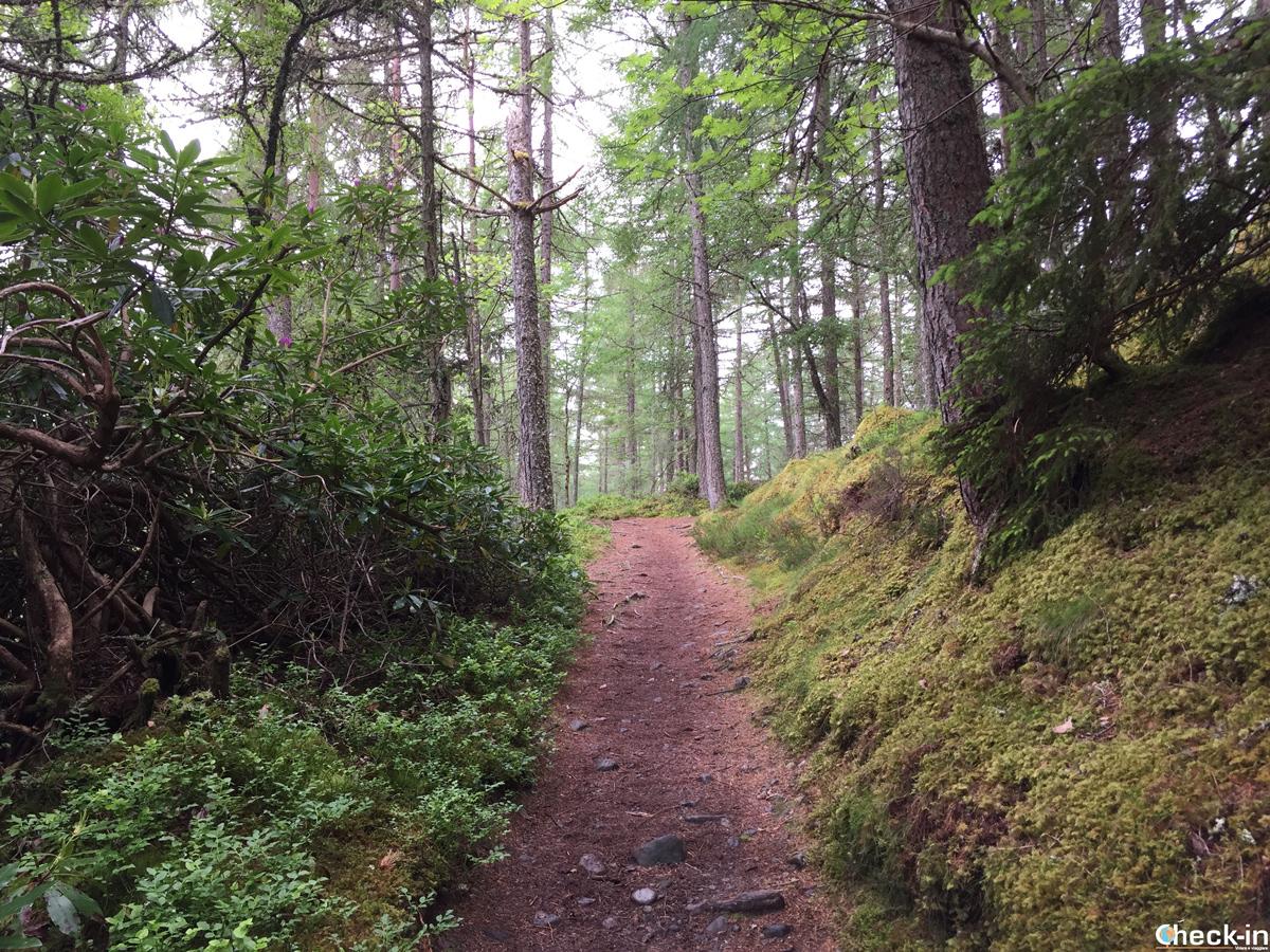 La foresta attorno alle Falls of Bruar vicino a Pitlochry, Scozia