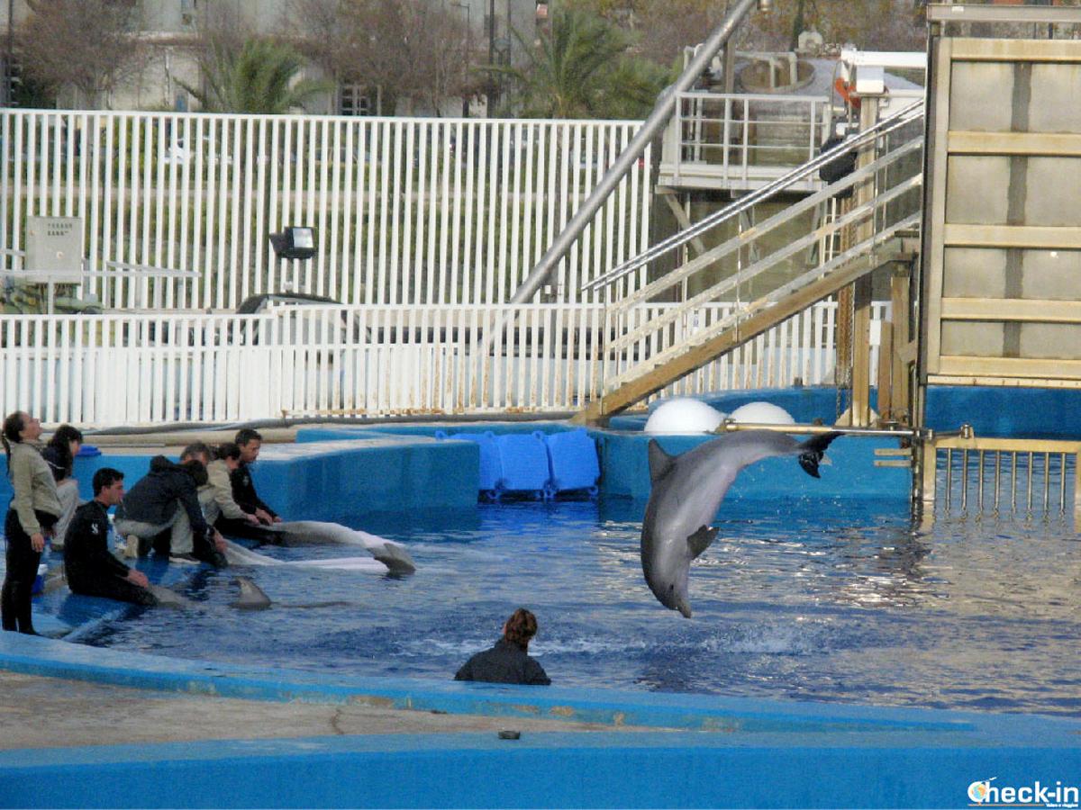 Esibizione coi delfini all'Acquario di Valencia - Città delle Arti e delle Scienze, Spagna