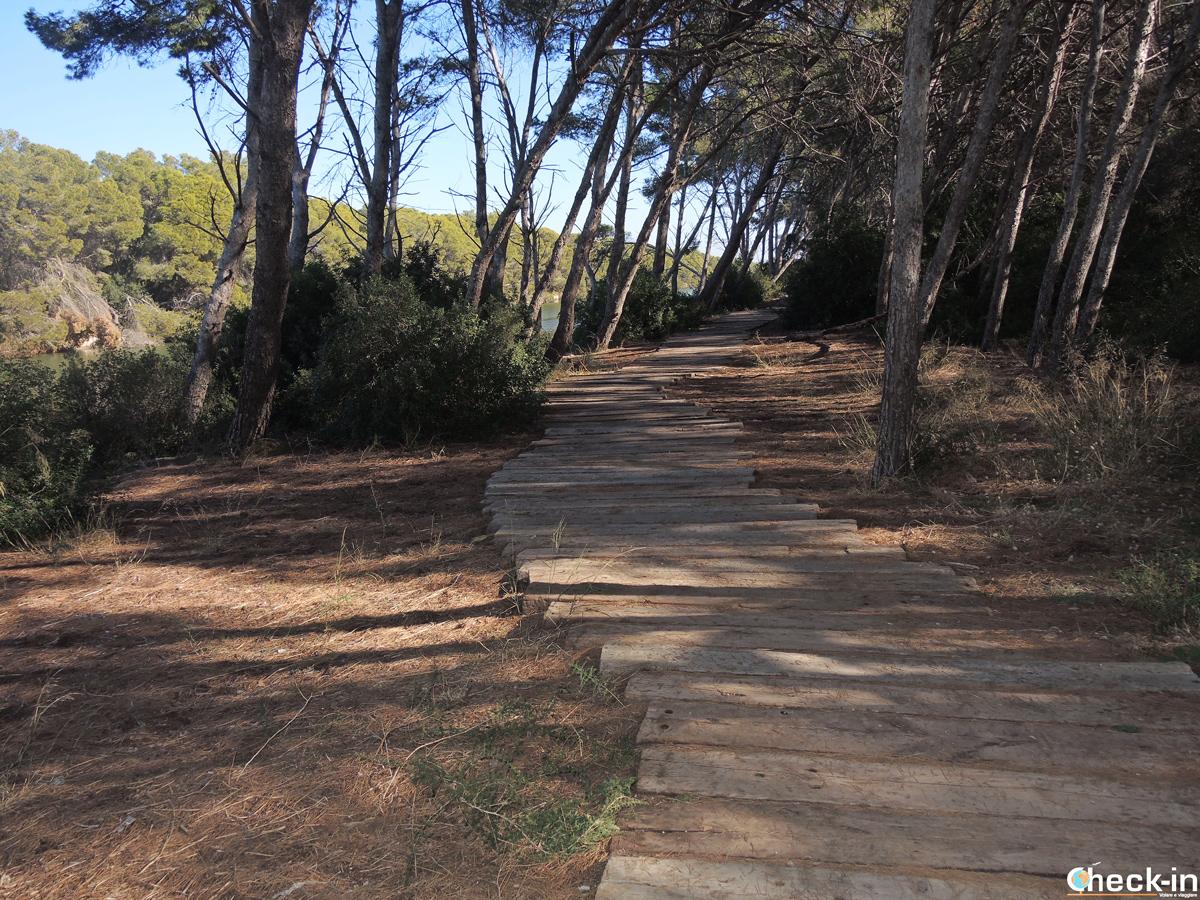 Itinerario a piedi per la Gola del Pujol nel Parco dell'Albufera - Valencia, Spagna