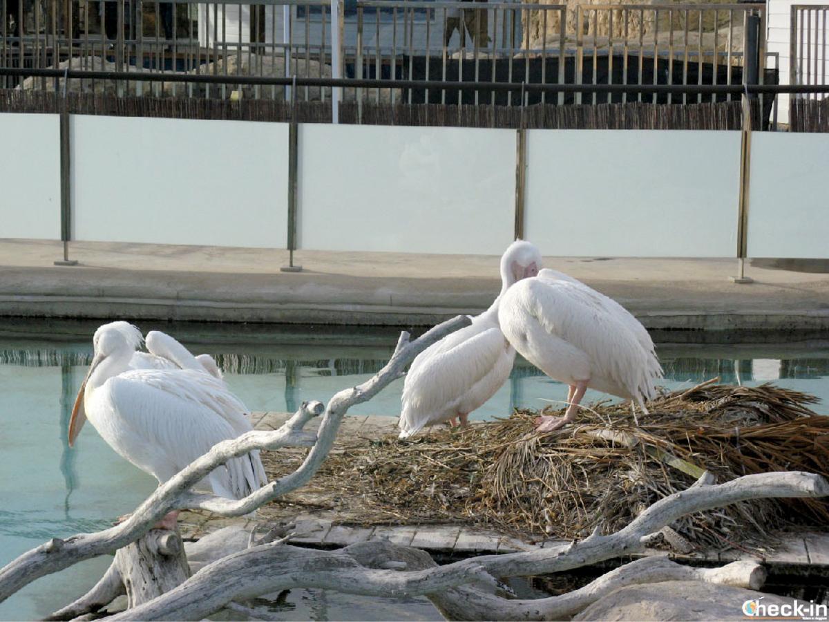 Fauna ospite dell'Oceanografico di Valencia