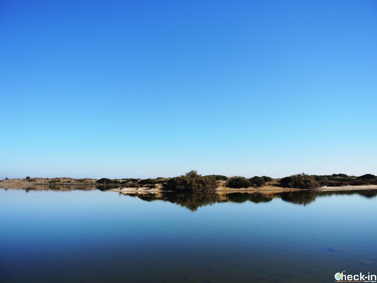 Vistazo del estanque del Pujol - Albufera de Valencia