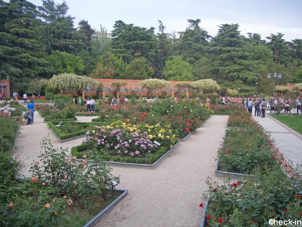"""La """"rosaleda"""" del Parque del Oeste di Madrid"""