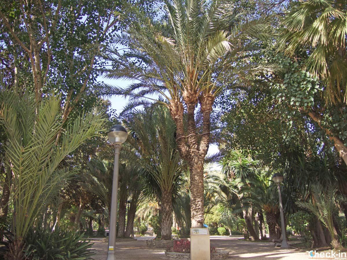 Visita del Parque Municipal all'interno del Palmeral de Elche - Spagna