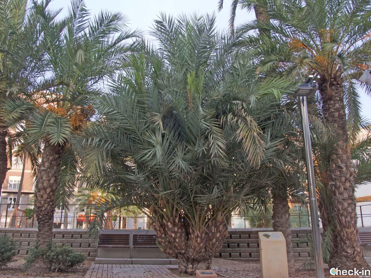 La Palmera dedicata a Taleb Rifai - Elche, Spagna