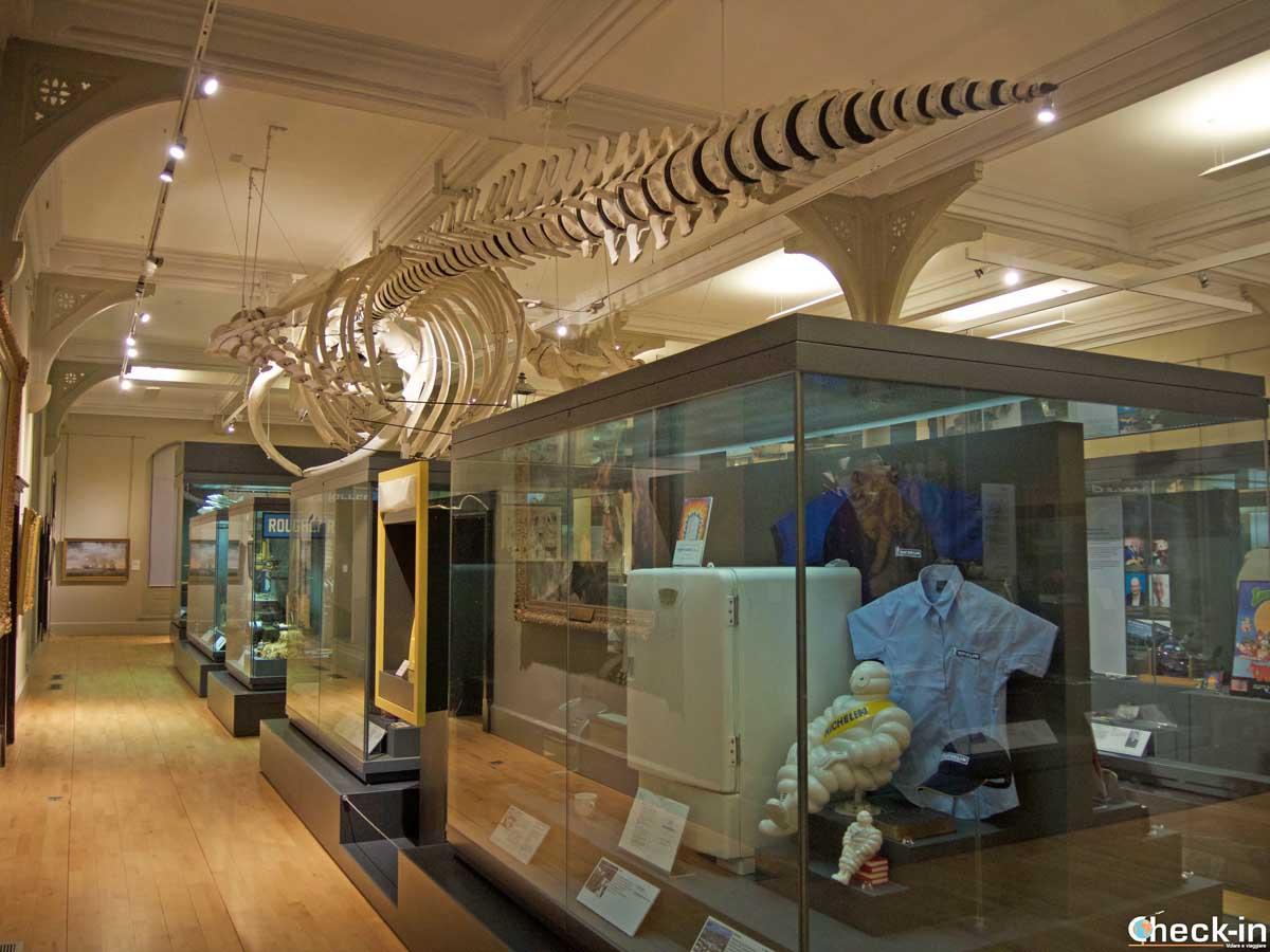 Lo scheletro di balena conservato alla McManus Galleries di Dundee