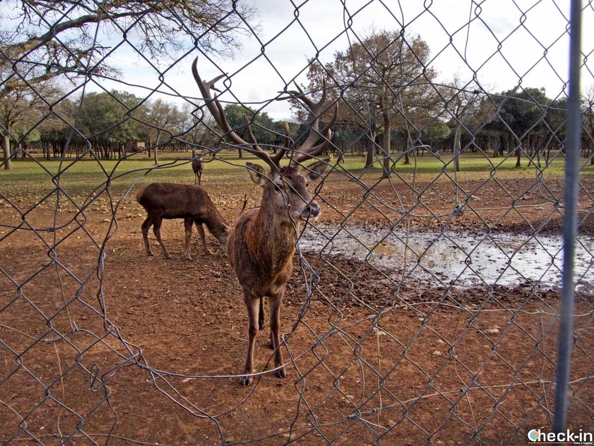 Reserva de ciervos en el Monte El Viejo de Palencia
