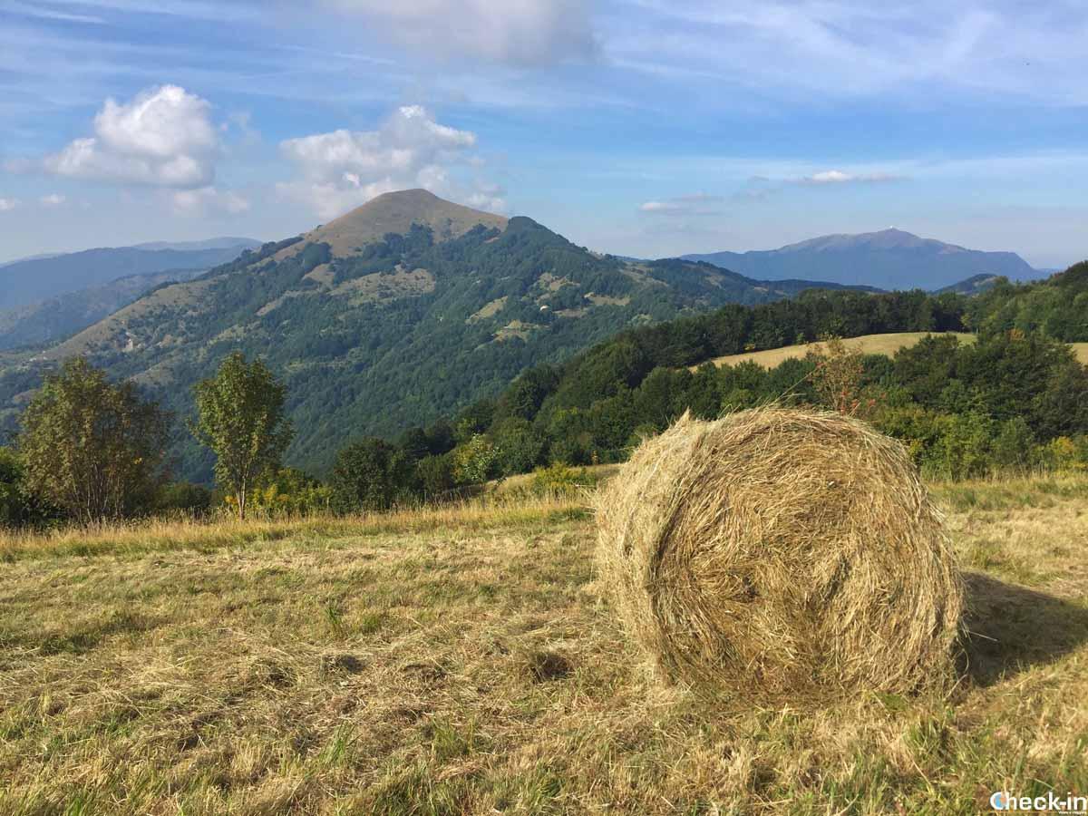 Trekking in Liguria - Parco Naturale Regionale dell'Antola