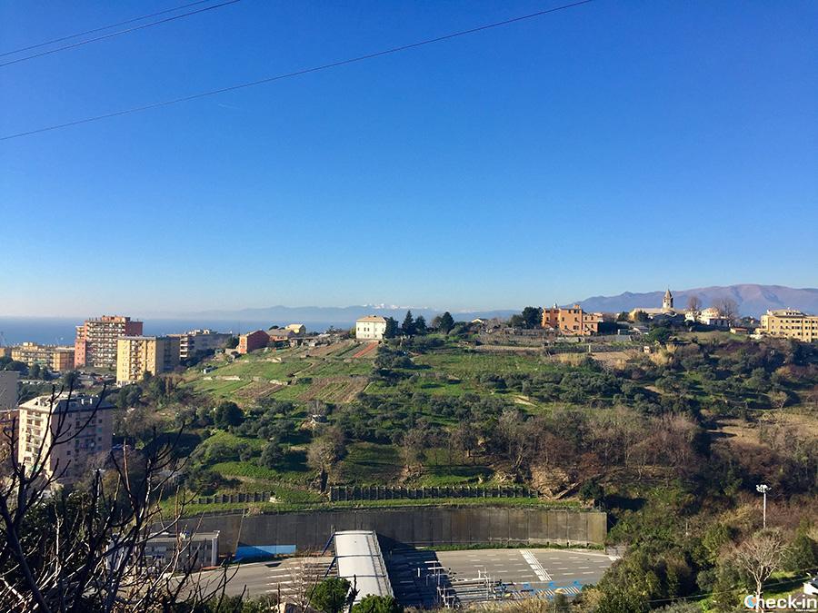 Trekking urbano in Valpolcevera: quartiere Belvedere di Genova