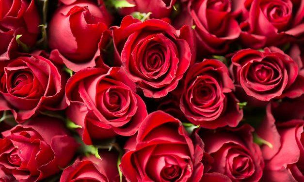 """Anniversari, feste ed eventi speciali: come celebrarli """"a distanza"""" con la consegna di fiori a domicilio"""