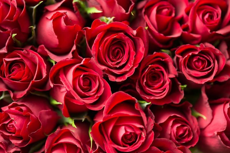 Mazzo di rose rosse fresche con consegna in giornata