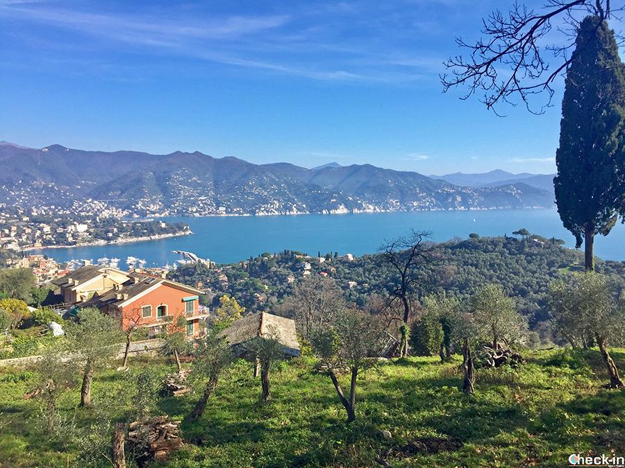 Belvedere su Santa Margherita Ligure da Nozarego