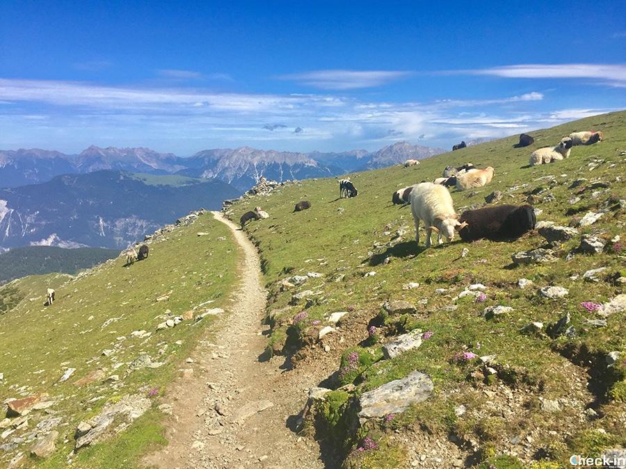 Camminate panoramiche in Tirolo - Acherkogel, Ötztal
