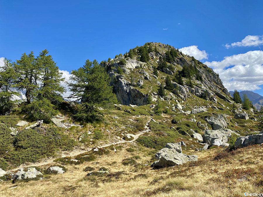 Camminate nei dintorni di Courmayeur - Mont Chetif da Entrèves