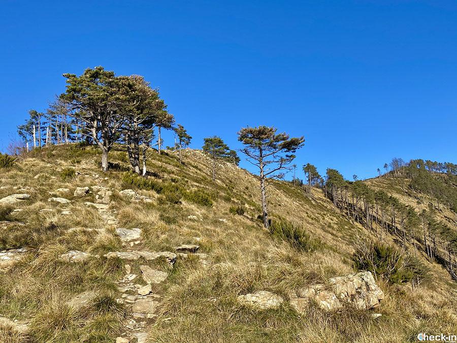 Dove camminare nelle alture di Genova Nervi: dal monte Giugo al Cordona