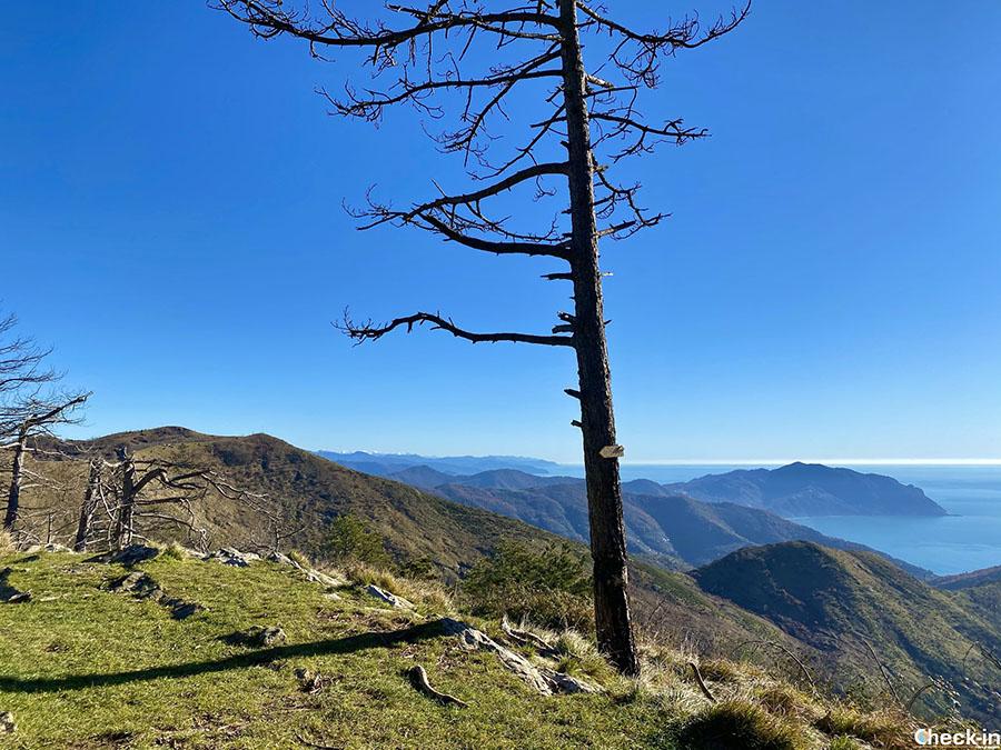 Trekking urbano da Genova Nervi al monte Cordona, a 802 m di quota - Liguria di levante