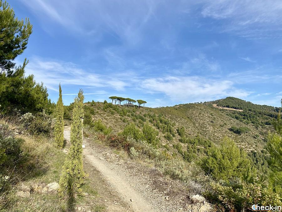 Sentiero per Poggio Brea da Colla Micheri, sopra Laigueglia (SV)