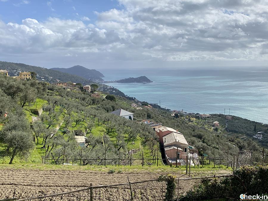 Vista panoramica su Sestri Levante dalla frazione Santa Giulia di Lavagna (Liguria)
