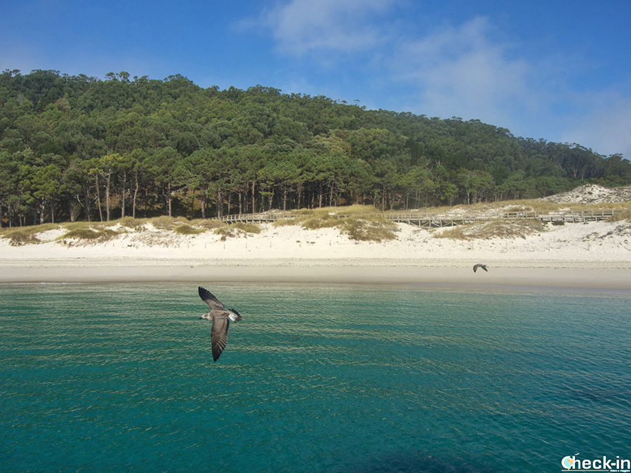 Excursión en barco a las Islas Cíes - Qué hacer cerca de Vigo (Galicia)
