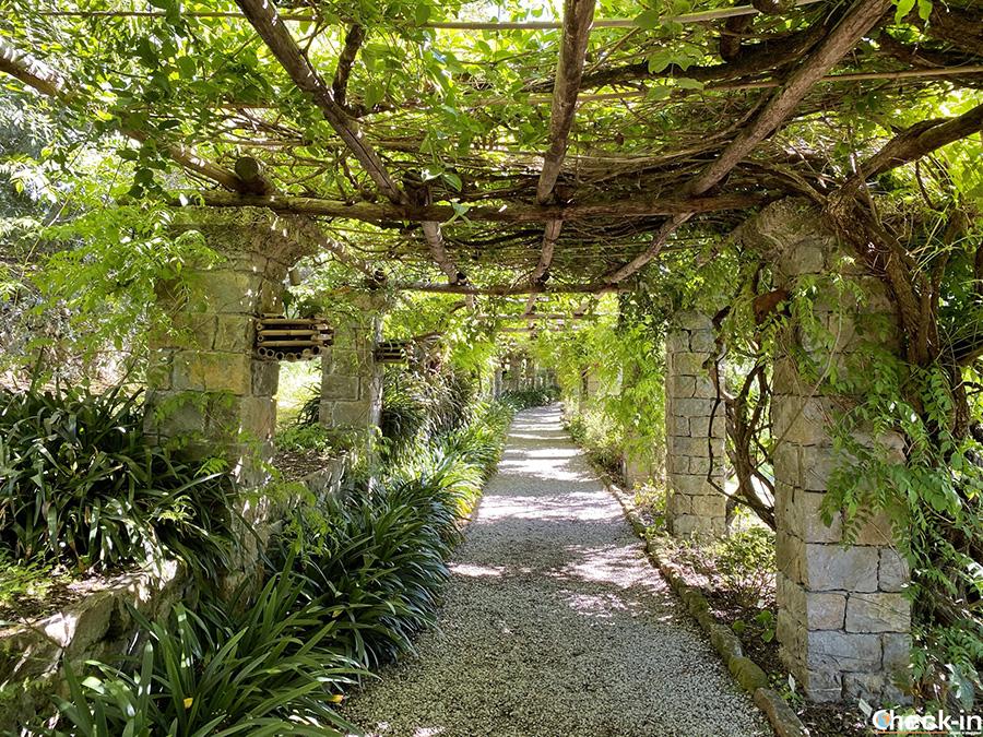 """Pergola """"Topia"""" - Giardini Hanbury, Ventimiglia"""