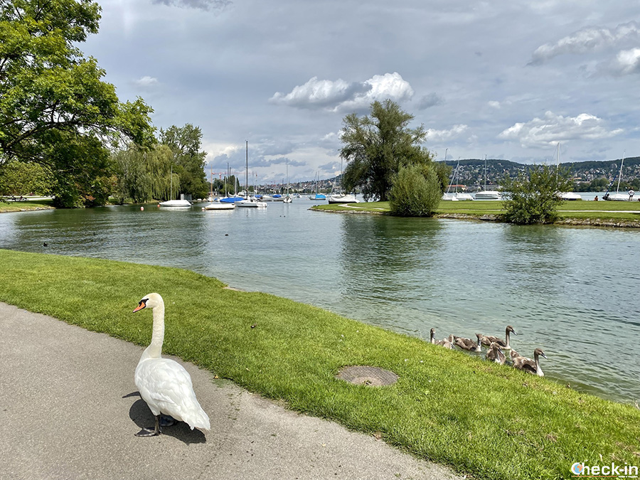 Aree relax lungo il Lago di Zurigo: isolotto di Saffa-Insel