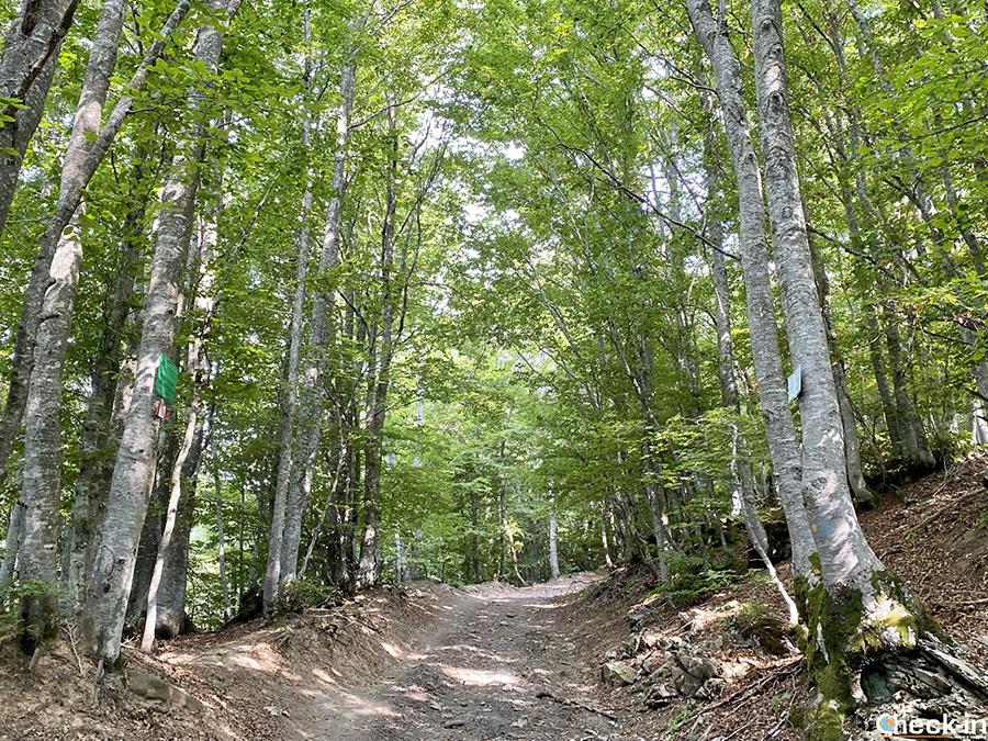 Informazioni sentiero da Capanne di Carrega al Monte Carmo - Parco Naturale Regionale dell'Antola