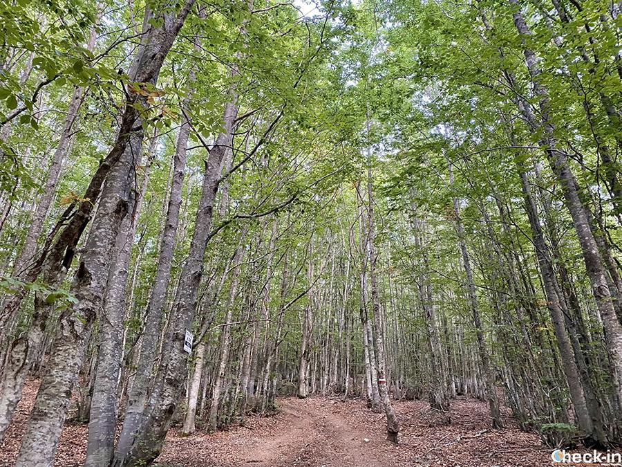 Informazioni su sentieri, segnavia e difficoltà delle escursioni nel Parco Naturale dell'Aveto, tra Liguria e Emilia-Romagna